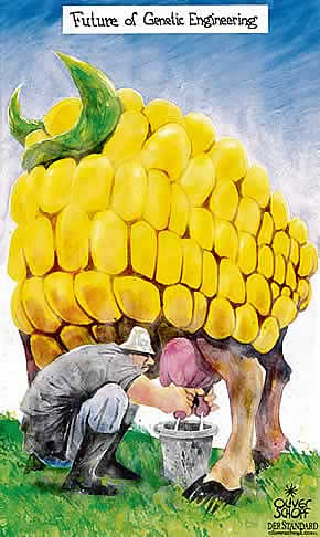 Oliver Schopf, editorial cartoons from Austria, cartoonist from Austria, Austrian illustrations, illustrator from Austria, editorial cartoon Sience and Technologie 2008: genetic engineering, corn, cow, milking, future